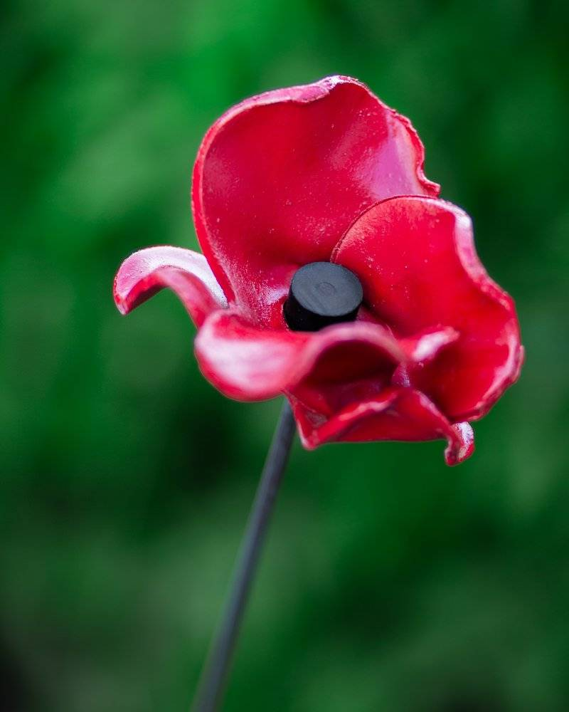 First World War 100 year Commemorative Poppy